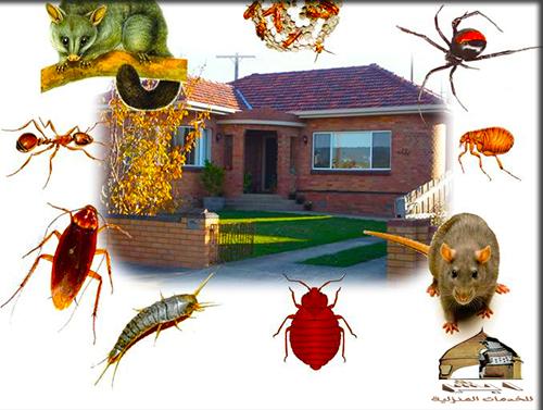 احسن شركة مكافحة حشرات بأبى عريش