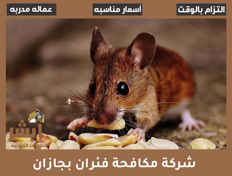 شركة مكافحة فئران بجازان
